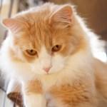 きょうのネコズ ウーちゃんがお話ししたいことがあるようです