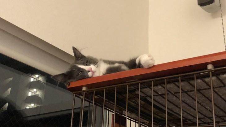 きょうのネコズ 猫マンションを紹介するよ!
