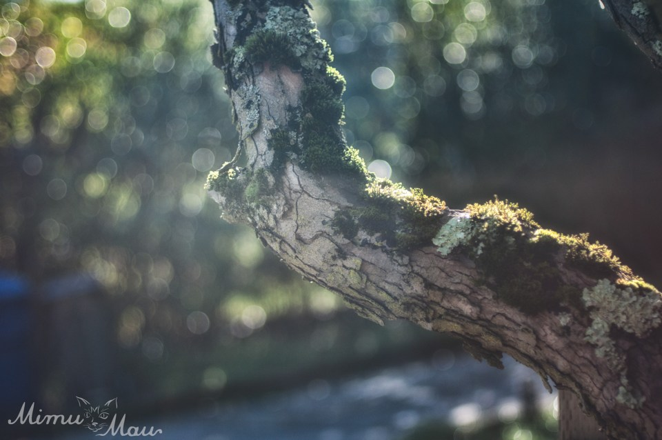 mossytree