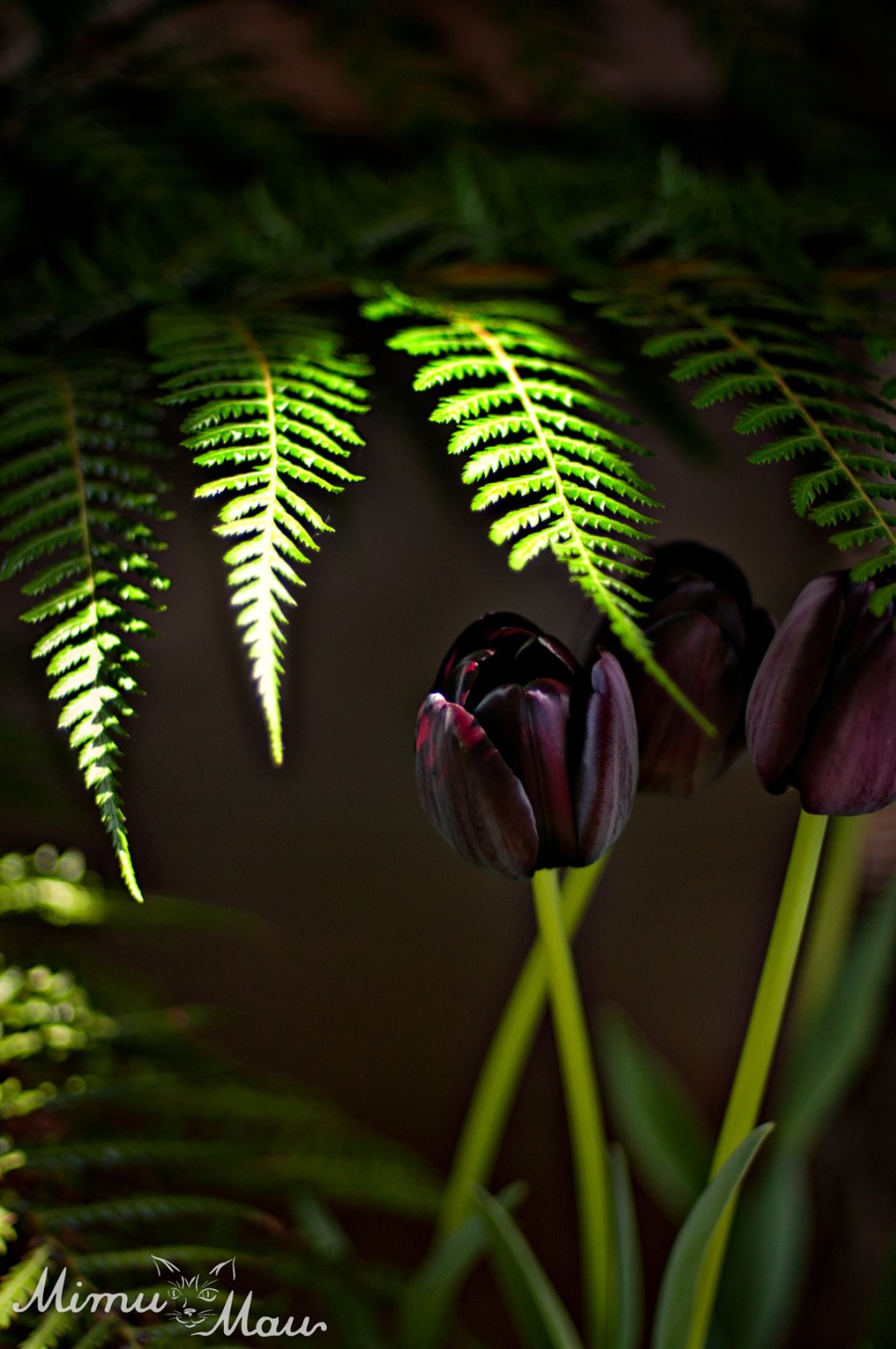 ferns+tulips