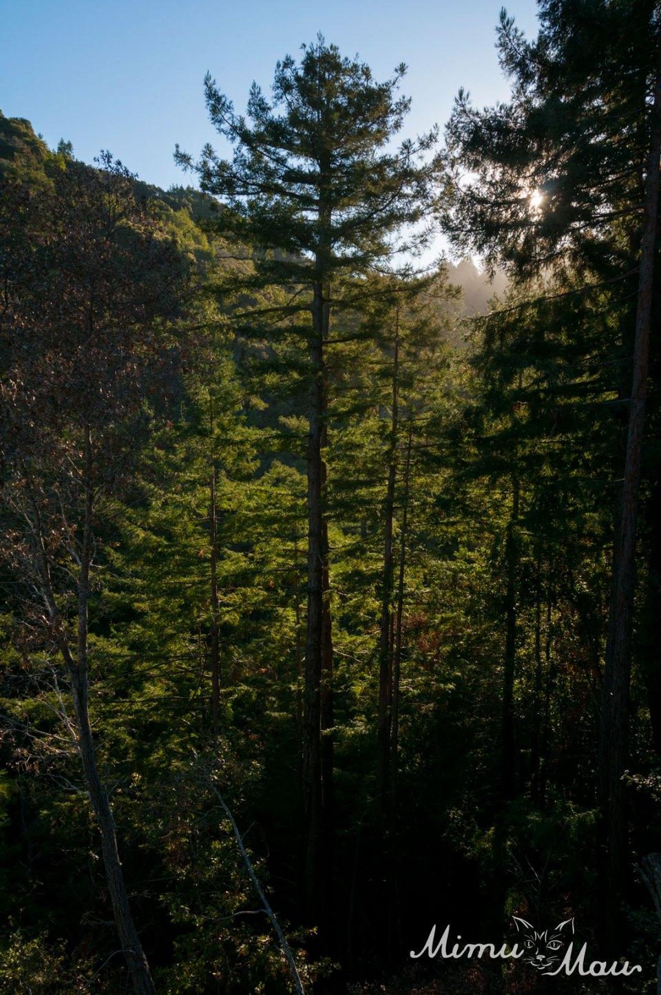 RedwoodsatCabin