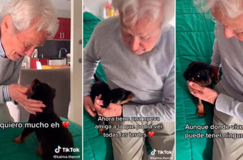 Anciano tiene una emotiva reacción al recibir a un perrito de regalo y se vuelve viral