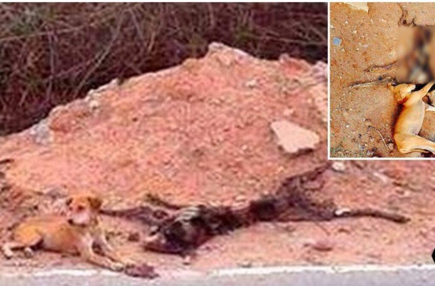Cachorrito no abandona el cadáver de su madre hasta que alguien lo rescata