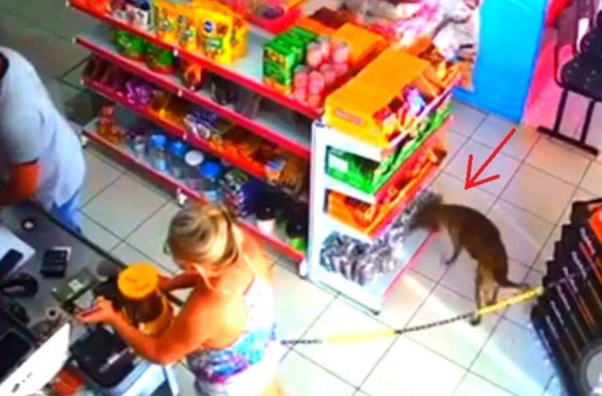 Perrito es acusado de ladrón por apoderarse de unos empaques de una tienda de mascotas