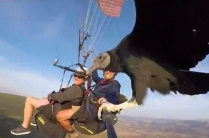 Jóvenes fueron sorprendidos por una enorme ave cuando hacían parapente. Se posó en su selfie stick