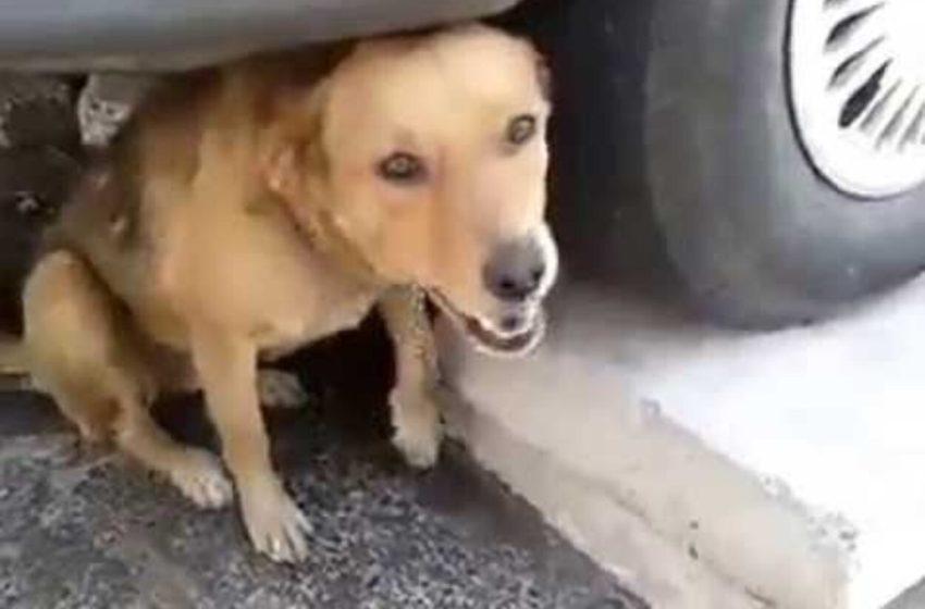 Perrito clamaba por ayuda, tras haber sido impactado por un proyectil de bala y se escondía de su verdugo debajo de una camioneta