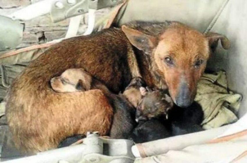 Perrita salvo la vida de un indefenso bebe que fue abandonado. Lo acurruco como si fuera uno más de sus crías