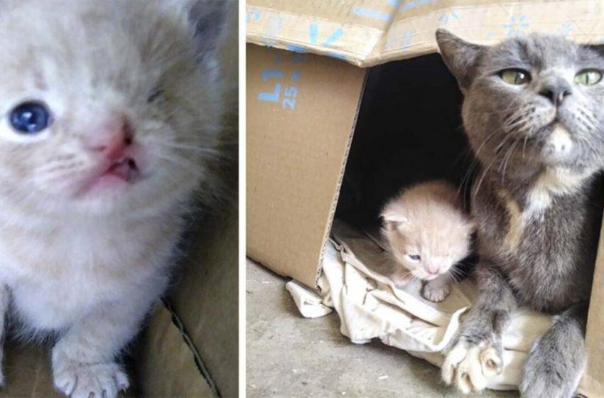 Gata lleva a sus  rescatistas donde sus gatitos y uno de ellos tiene una condición especial