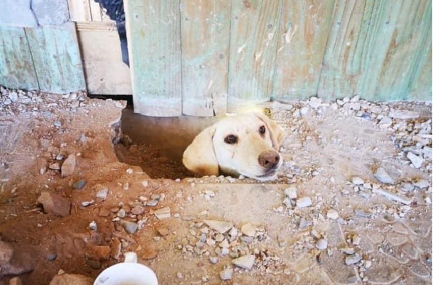 Perro desaparecido es encontrado atrapado debajo de una casa, gracias a que asomo su cabeza