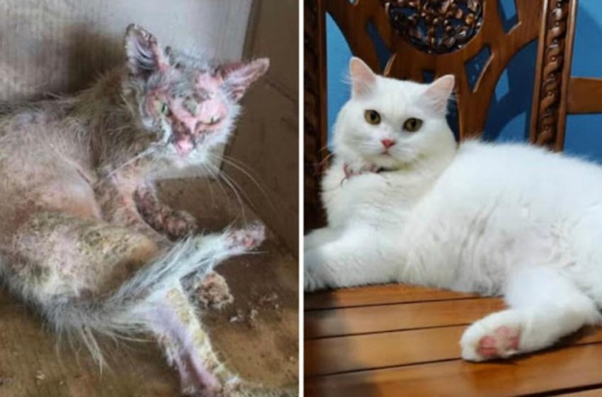 Gatita callejera fue encontrada en pésimas condiciones, pero con amor y cuidados se convirtió en una adorable princesa esponjosa