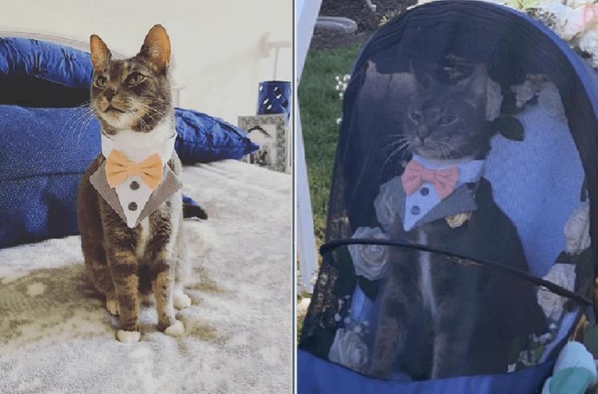Un gato que llevaba los anillos de boda a sus dueños se roba las miradas de todos los invitados de la ceremonia