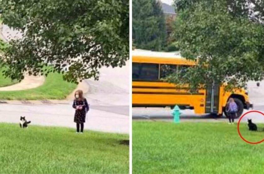 Gato acompaña a su amada niña a tomar el autobús escolar todos los días (VIDEO)