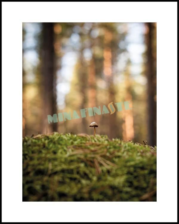Liten svamp i stor skog. Unik fotokonst ni inte hittar någon annanstans!