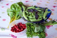 En del av skörden och då även med gul mangold, persilja, smultron, hallon och kungsmynta (oregano)