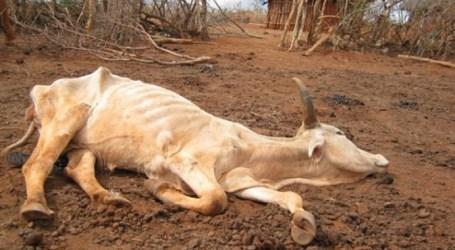 Pemerintah Zimbabwe Mohon Bantuan Hentikan Kelaparan Massal