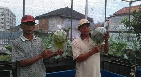 KOMIK JAKA Binaan Rumah Zakat Panen Sayuran Hidroponik