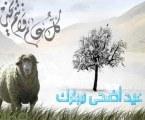 Berqurban Amalan Utama Idul Adha (Oleh: Ali Farkhan Tsani)
