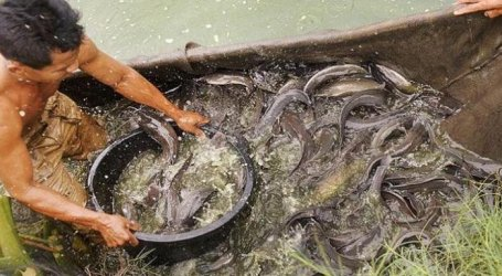 Konsumsi Ikan Masyarakat Indonesia Naik Tiap Tahun