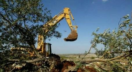 Tanah Petani Palestina Makin Berkurang Akibat Permukiman Yahudi
