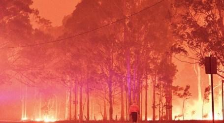 Kebakaran Tewaskan Satwa Liar Asli Australia