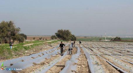 Israel Banjiri Pertanian Gaza dengan Air Limbah