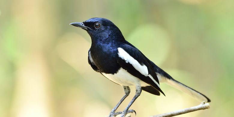 Puisi Tentang Hewan Peliharaan burung