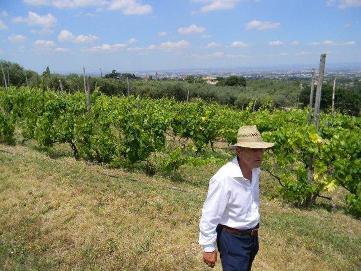 Frascati Wine terrain