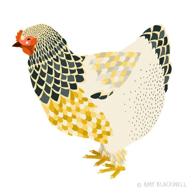 chicken-yellow-illu_amy_blackwell