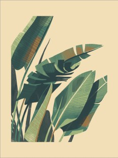 palmPlant-chris-turnham