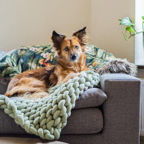 couverture animaux