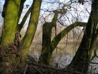 alberi nel Budel del Lupo