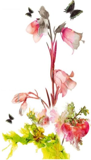 Suzzar - tra piante orti e fiori