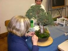 Gonzaga - mondo bonsai - foto di repertorio.4