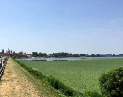 Mantova- Lago di mezzo - trigolera
