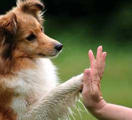 cani-danno-la-zampa