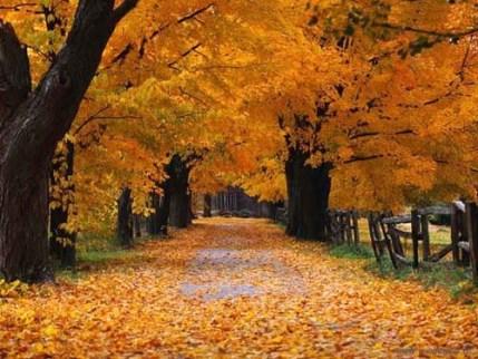 foto d'autunno.jpg