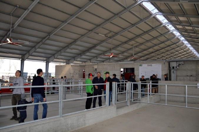 interno della nuova stalla di cortesi.jpg