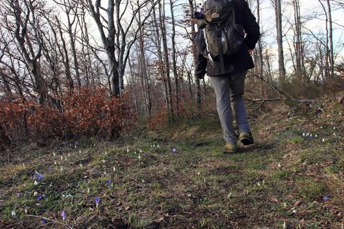 Escursione tra crochi e bucaneve.jpg