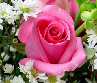 festa dei fiori