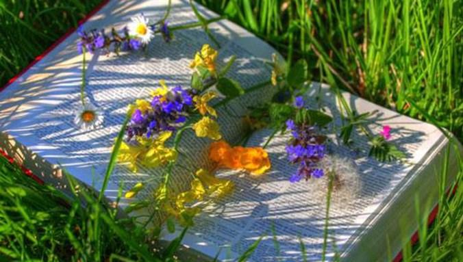 parole e fiori in giardino.jpg