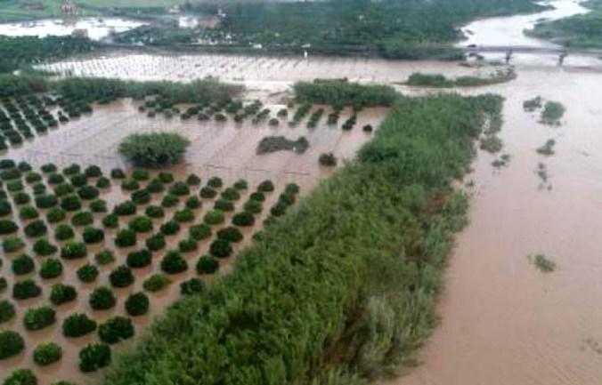 aziende_agricole_in_ginocchio.jpg