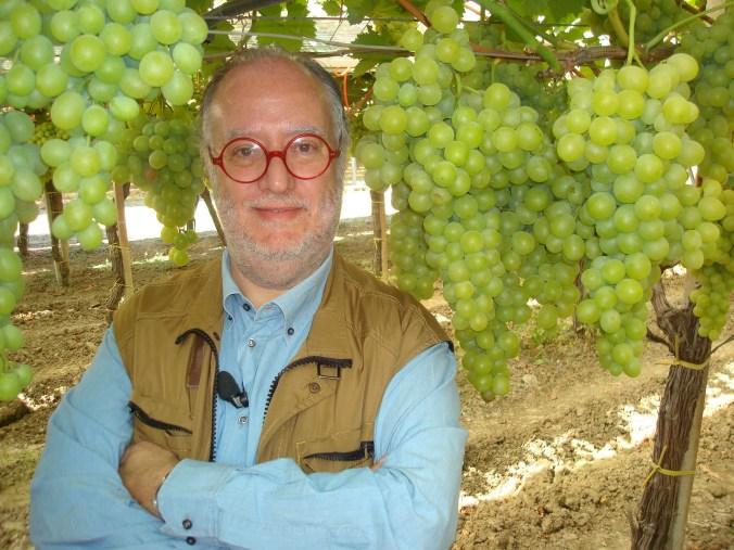raspelli regina della tavola (uva) 1.jpg