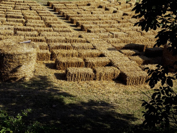 arena balle di paglia cotignola foto marco zanella