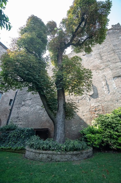 Interno Verde Palazzo Castiglioni 3