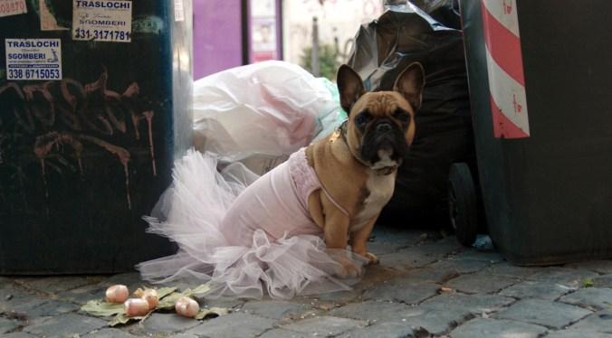 THANKS ! un film di Gabriele Di Luca - photo Bepi Caroli - cane Lily