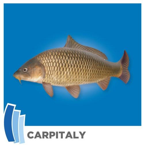 Carpitaly immagine 2020.jpg
