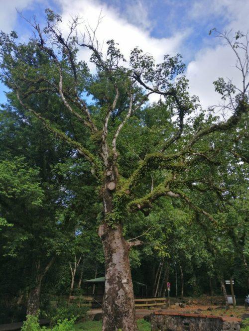 Mind and Beauty - Balade aux Trois-îlets : Entrée Forêt Vatable