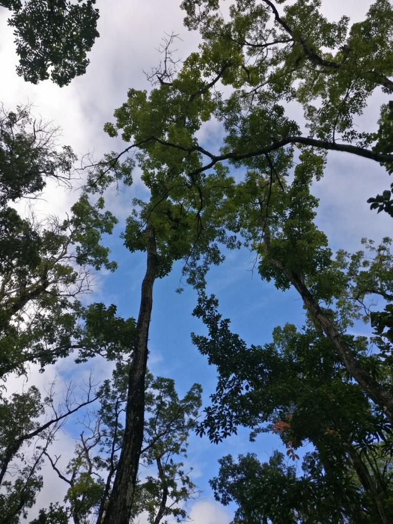 ciel de la forêt Vatable
