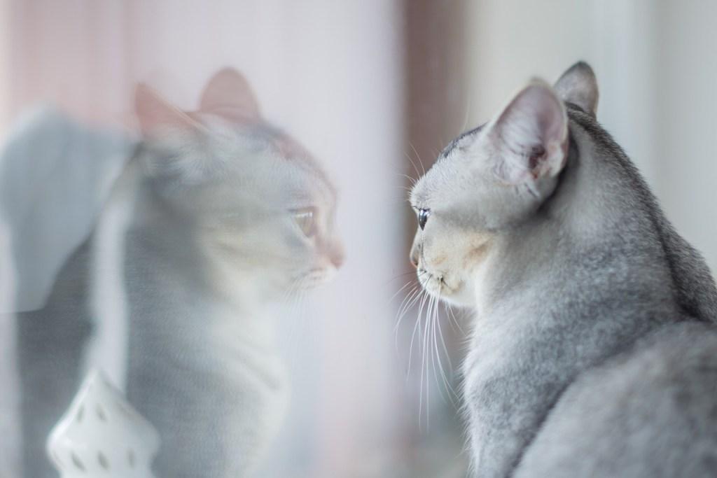 Mind & beauty - Se regarder dans le miroir