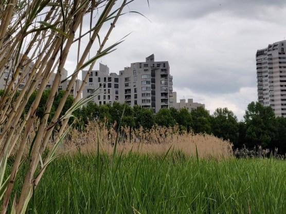 Bâtiments,,Roseaux & Bambous